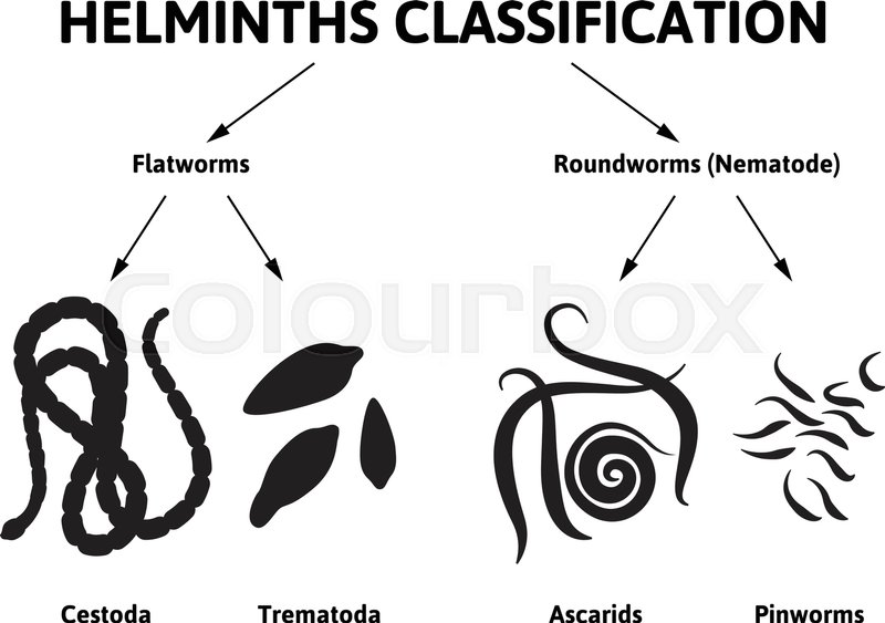 helminth nematode worms