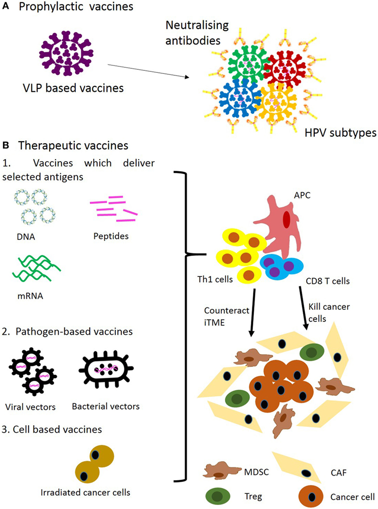 hpv vaccine pubmed