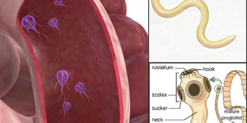 enterobioza cmd cancerul bacterian la trandafiri