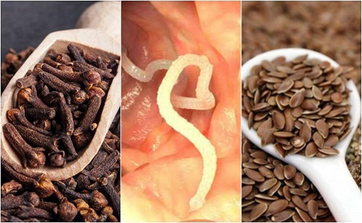 remedii pentru eliminarea paraziților din organism